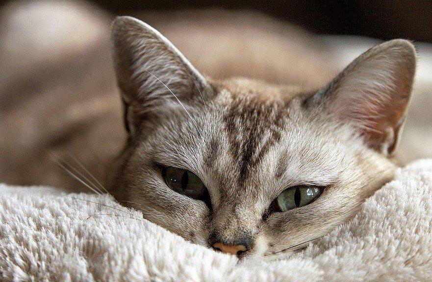 Brussels beleid inzake dierproeven - katten