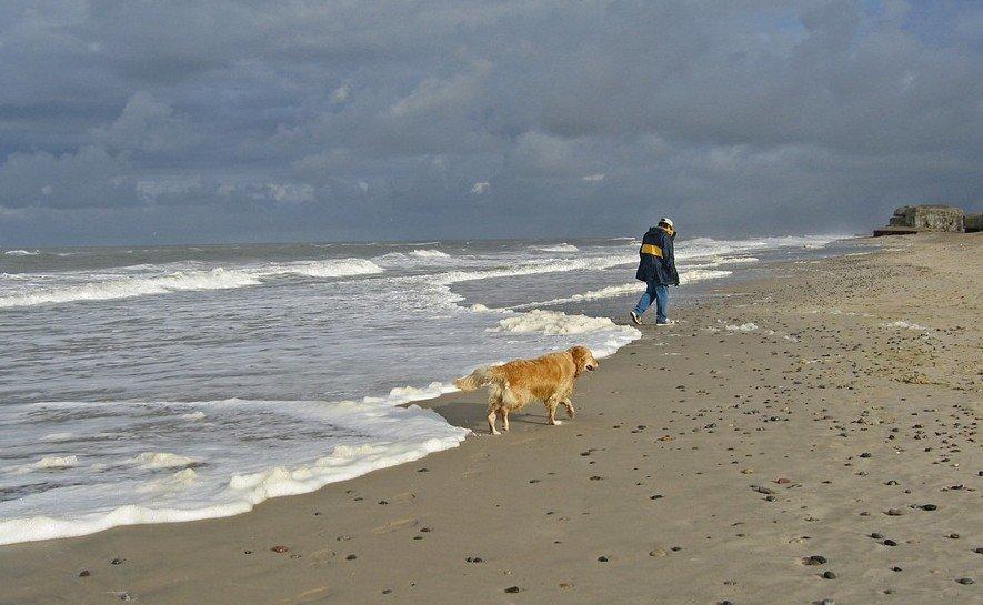 Strandopruimacties met de Federal Truck - hond op strand