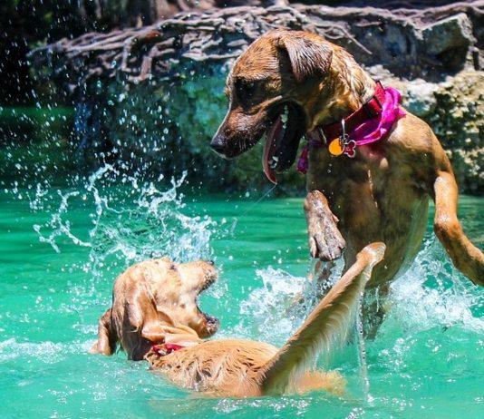 zwemmen en spelen met je hond