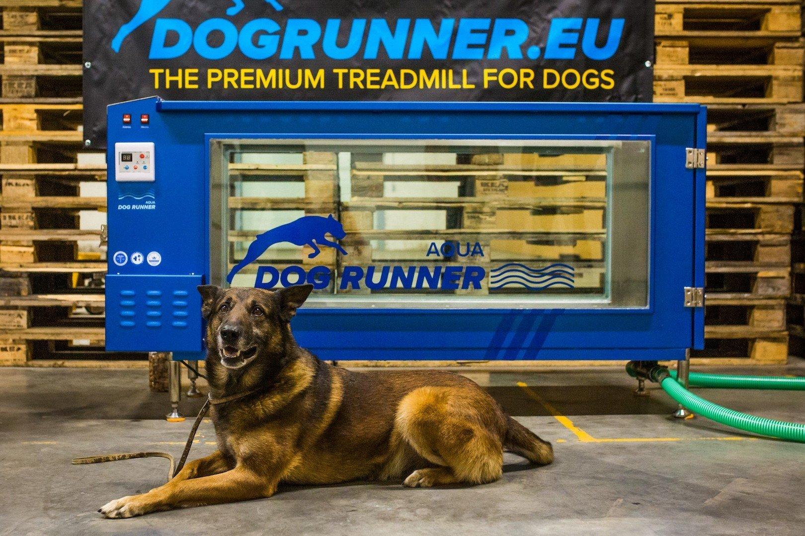 Janez Detd frontman ontwikkelt onderwaterloopband voor honden - Aqua Runner 1