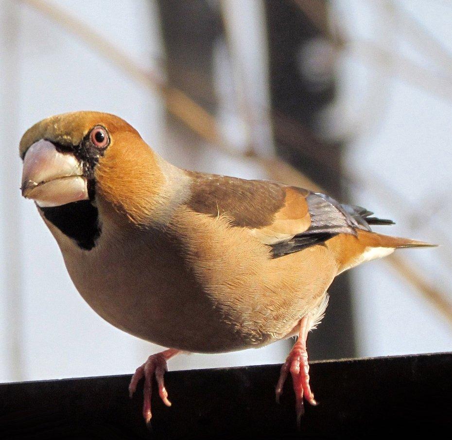lijst vogels
