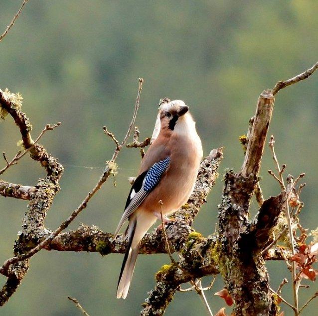 Tuinvogels herkennen en voederen
