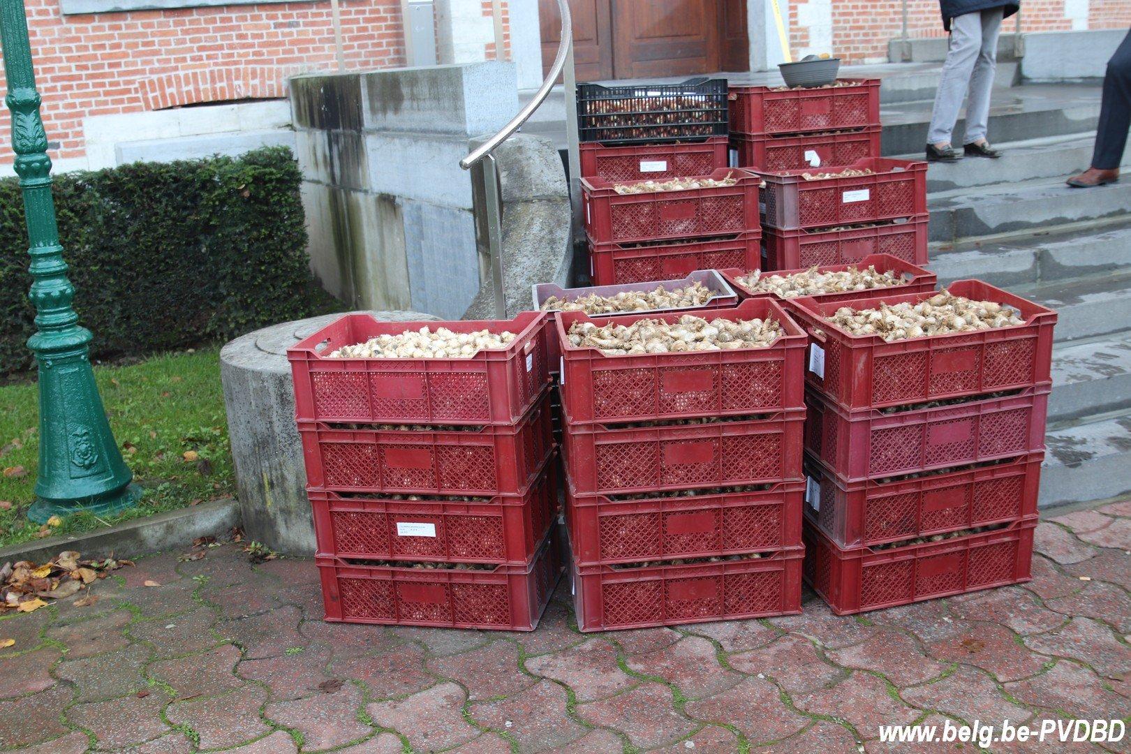 Dilbeek ontvangt 10.000 voorjaarsbollen van het kasteel van Groot-Bijgaarden - IMG 3646