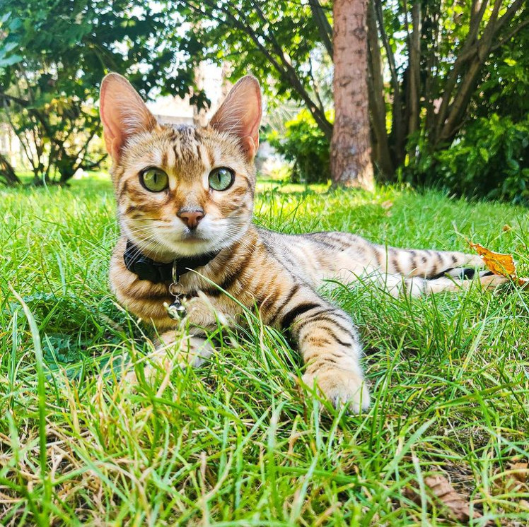 3000 euro voor vinder van vermiste kat in Gent