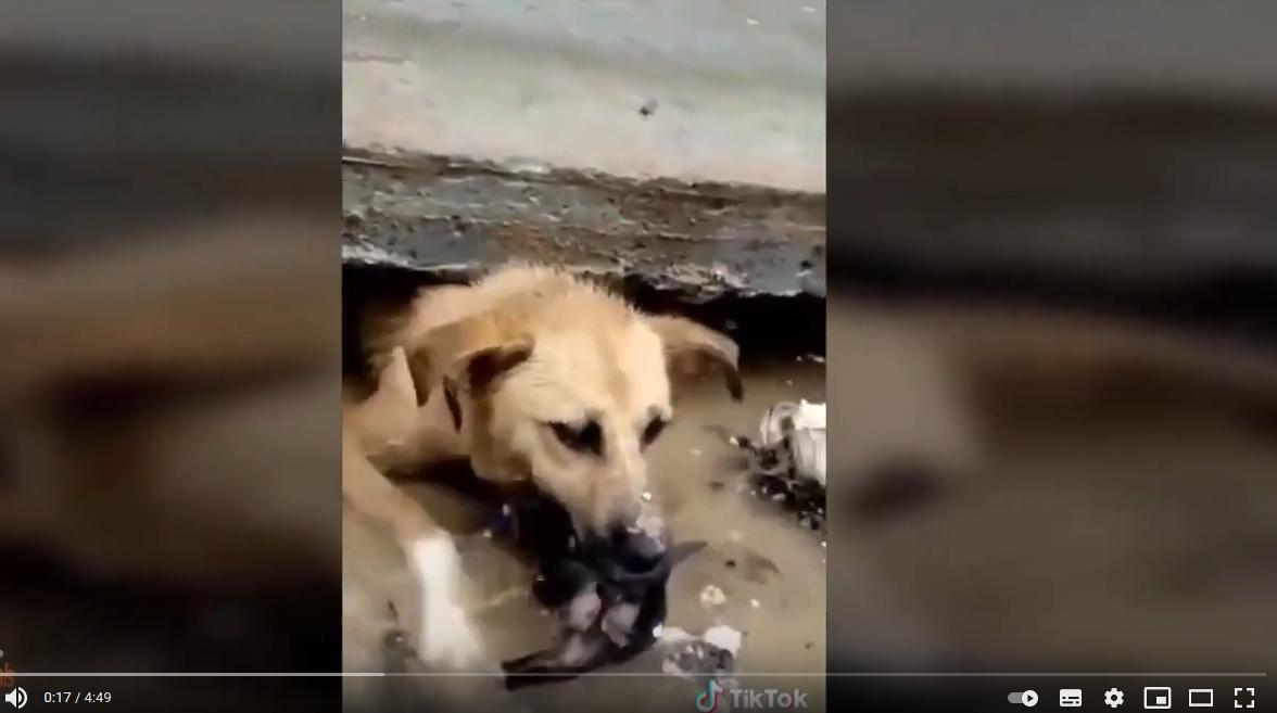 YouTube verbiedt nep video's bij het redden van dieren