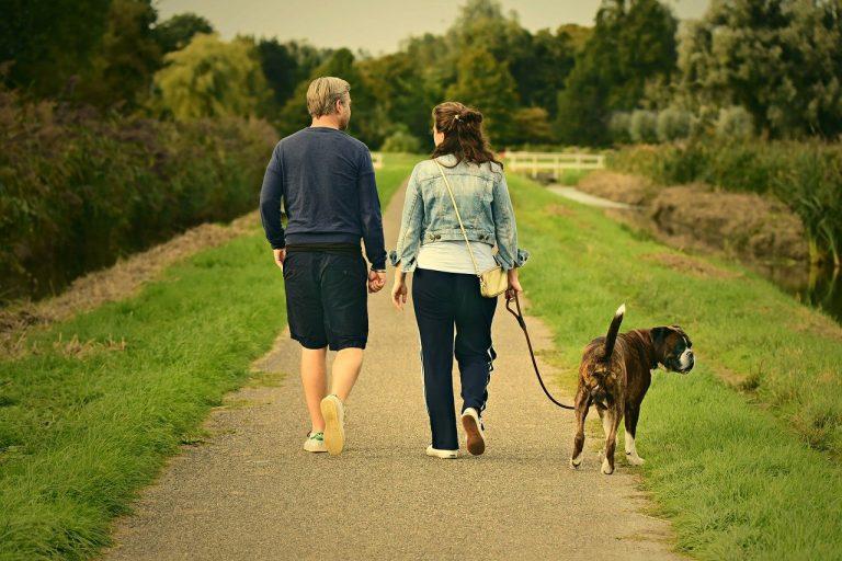 3 tips voor een ontspannende wandeling met je hond